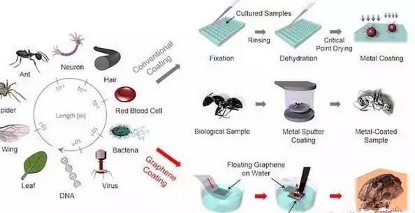 石墨烯多种新用途丨保护玻璃、提高成像技术