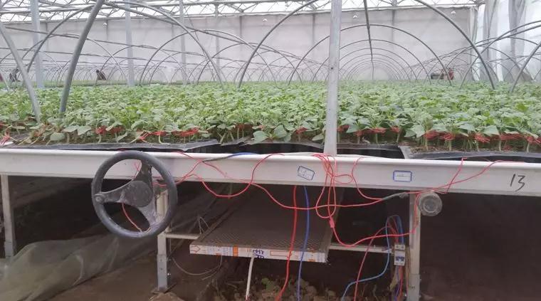 石墨烯远红外电暖在蔬菜集约化育苗中的应用初探与前景分析